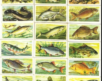 British Trade/Cigarette Card Set (50 Cards) - Freshwater Fish Issued In 1960 by Brook Bond Tea. Set Of Fish Native To The British Isles