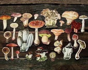 Mushrooms - Vintage Paper Ephemera Craft Pack, 26 Piece - Junk Journalling Smash Books Scrapbooking Nature Journals Collage Supplies Set