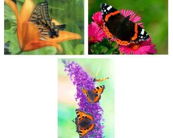 3 - Butterflies on Flowers - 3D Lenticular Postcards Greeting Cards