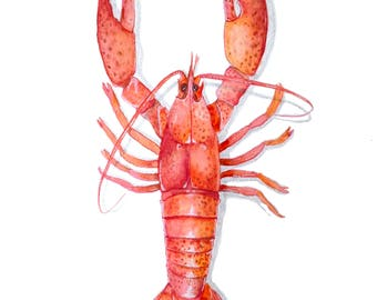 Illustration of a red lobster