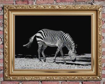 Zebra cross stitch pattern,Counted cross stitch chart,xstitch,Instant download #17