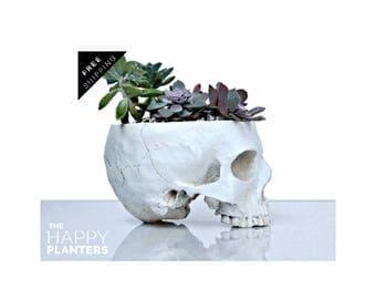 Skull Planter Large Size White, Cactus planter, Indoor Plant Pot, Human Skull Planter, Cactus Planter Gift, Air plant Terrarium, Cactus Pot