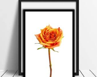 Orange Rose Print,Color flower Art Nursery,Wall Decor,Minimalist,                  Wall Art Decor,Printable Flower,Living Room Decor