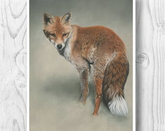"""Giclee Limited Edition Print - """"Foxtail"""""""