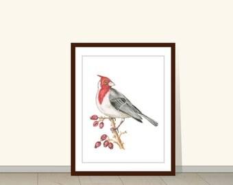 Cardinal Bird Print, Watercolor Painting, Animal Wall Art, Watercolor Illustration, Wall Art, Wall Decor, Bird Art, Art Print, Wildlife