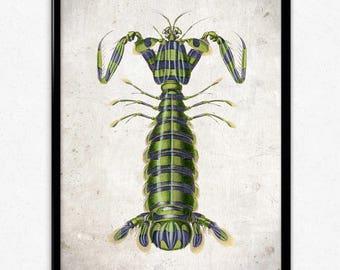 Mantis Shrimp Vintage Print - Shrimp Poster - Shrimp Art - Beach Decor - Beach Art - Bathroom Decor - Ocean Art - Bathroom Art - Orbigny