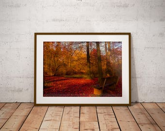 Autumn Fall Forest Bench, Red Leaves, Digital Download, Photography by JDOsnaps