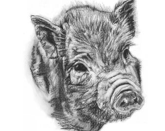 ORIGINAL ARTWORK A4 Print Charcoal Drawing of a Kunekune Piglet by Animal Artist Elena Pimentel