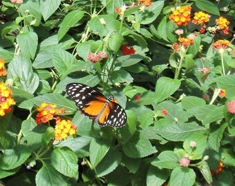 Butterfly House - Mackinac Island - Instant Download