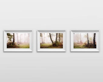Set of 3: Autumnal trees, Original Photography Print, Foggy Landscape, Wall Art, Decor