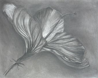 hibiscus charcoal/eraser drawing