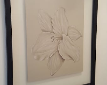 Lily Flower Charcoal Drawing Framed