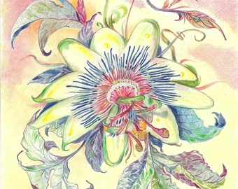 Passion Flower | Watercolor, Pencil, Original, Floral, Outdoor, Nature, Colorful, Drawing, Wall Art, Decor