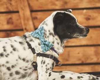 Dog Bow Tie | Blue Bird | Free Shipping to Canada