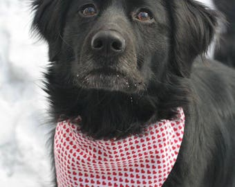 Valentines Day Pet Bandana