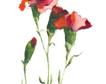 January Carnation