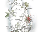 giclee art print of a map of Sri Lanka with illustrated plants and flora