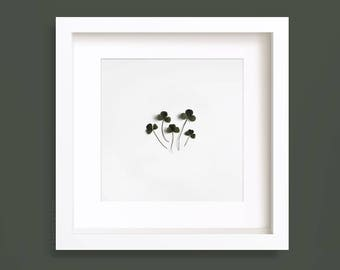 Clover leaves Photography, trifolium, Botanical Print, Greenery, Minimalist Photo, Gallery Wall, Nature Photo, Square Art Prints, Wall art