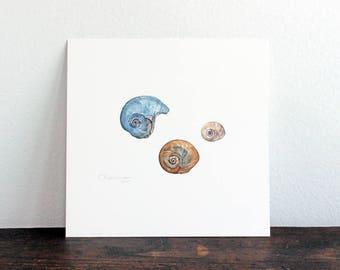 Shark Eye Shells Original Watercolor Painting