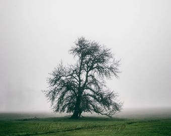 Tree Photography, Rustic Wall Art, Fog Photo, Farm Field, Landscape Photograph, Minimalism Art, Farmhouse Decor, Country Landscape Photo