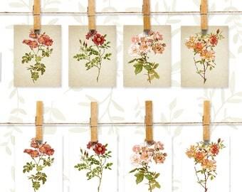 Botanical note cards stationery set, 8 cards, Botanical Roses note card set, Pink and Red Roses stationary set, Pink rose note cards, nc004