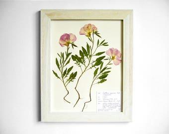 Real Evening Primrose 11x14 Framed Herbarium Specimen Art, #233, real flower art pressed botanical art pressed flowers purple wildflower art