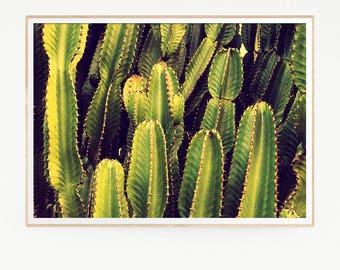 Printable Cactus Print Poster Wall Tropical Retro Vintage Colour Photo Nature Minimalist Pink Sun Leaf Succulents Green Desert West 1016
