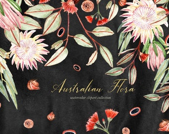 Australian flora, watercolor clipart, Digital clipart hand drawn. Eucalyptus, protea, grevillea, banksia,red flowers, logo, invitations