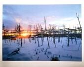 Photo Postcard - Garden in Winter
