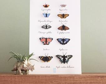 A Kaleidoscope of Butterflies Papercut Print