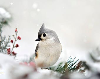 Winter Bird Print, Bird Art, Nature Prints, Bird Photography, Tufted Titmouse, Fine Art Photograph, Bird Pictures, Winter Wall Art, Wildlife