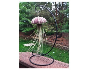 Sea Urchin Shell hanging Air Plant