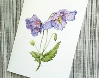 Blue Poppy Greetings Card, Meconopsis, Himalayan Blue Poppy