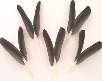 Lot of 5 pairs of Natural Tricolor Feathers