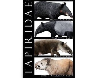 Tapirs of the World Poster