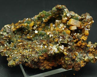 Wulfenite crystals with Mimetite, Mexico - Mineral Specimen for Sale