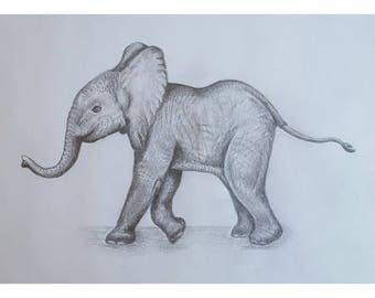 Elephant Calf - Signed Limited Edition A4 Print of an original pencil drawing.