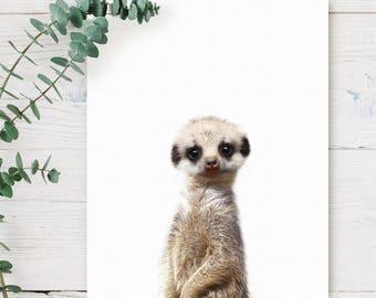 Baby meerkat print, PRINTABLE art, Safari animals wall art, Safari nursery, Mongoose print, Safari theme, Nursery art, Safari baby shower
