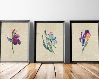 Iris Flower Wall Art | Floral Iris Bouquet, Floral Bouquet Print, Iris Spring Floral, Floral Newspaper, Newspaper Print, Botanical Iris