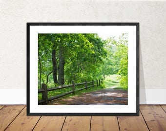 Illumination | Walking Path with Wooden Fence Photography Color Print | 11x14, 8x10 or 4x6 (Custom Sizes Available Upon Request)