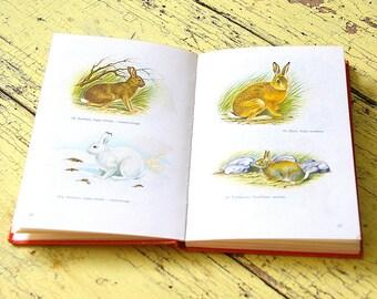 Vintage wildlife guide book.Vintage nordic animals illustrations.Whales polarbear elk moose wolf.Wildlife field guide.Vintage paper supply