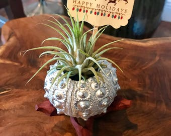 Unique Christmas Gift, Silver Sea Urchin, Urchins, Air Plant, Tillandsia in a Sputnik Sea Urchin Shell with Wood Stand, Work Christmas Gift,