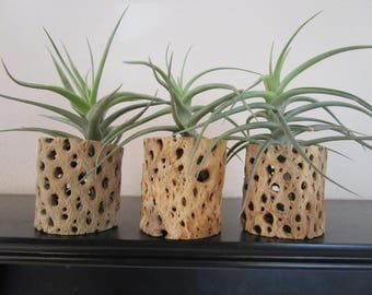 Set of 3 Wooden Planters with Air Air Plants