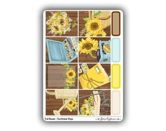 Full Boxes - Sunflower Rays