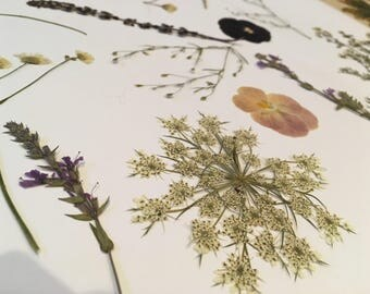 Natural Pressed Flowers - Mix