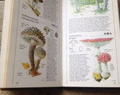 Guide to Mushrooms & Toadstools - Vintage Book - Watercolour Artist - Painting book - Creative gift