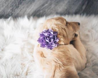 Dog Collar Flower, 3 inch dog collar flower, dog collar flower, Collar add on, Collar Flower