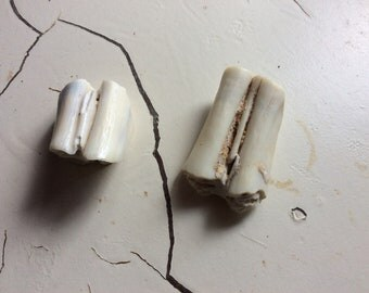 Found Old Animal Teeth Bones?  For Repurpose in Crafts Jewelry