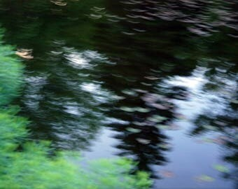 Tree reflection on water. Fine art photography. Abstract art. Nature photo, water, pond.