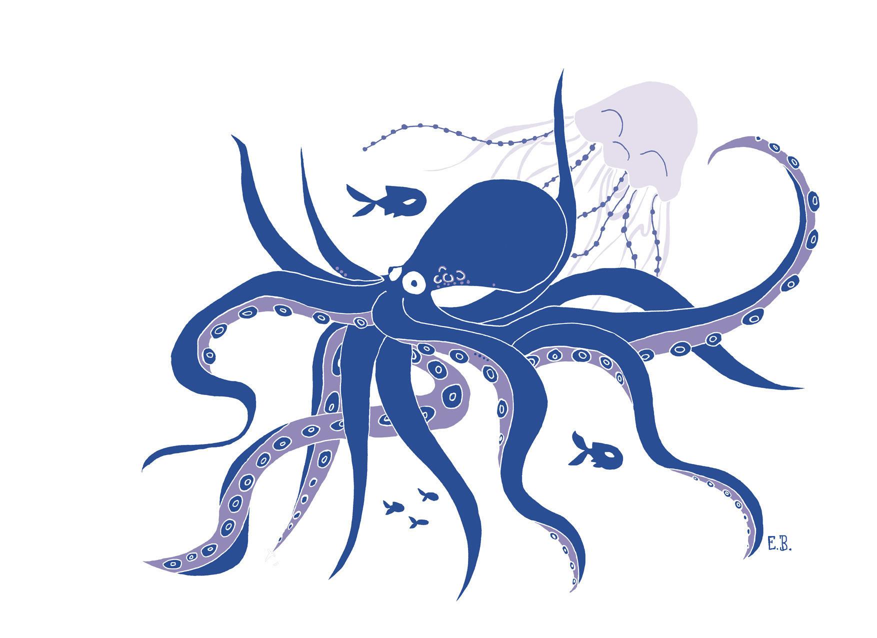 illustration affiche  u00e0 t u00e9l u00e9charger pieuvre et m u00e9duse animaux